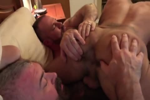 bushy Cub Needs Some raw Training From His Two Daddy Bears
