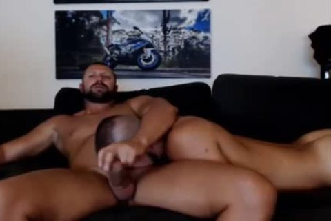 young Bear Sucks A older Bears weenie Live On Cruisingcams Com