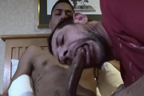 All penis sucking