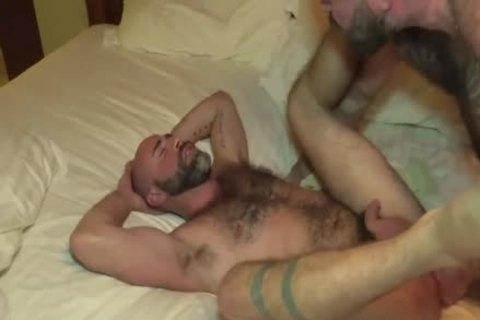 The Bear Likes The monstrous shlong Of The Bear Daddy
