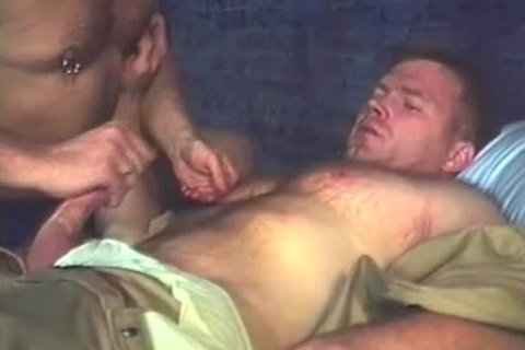 lustful Bear Prisoners poke And suck